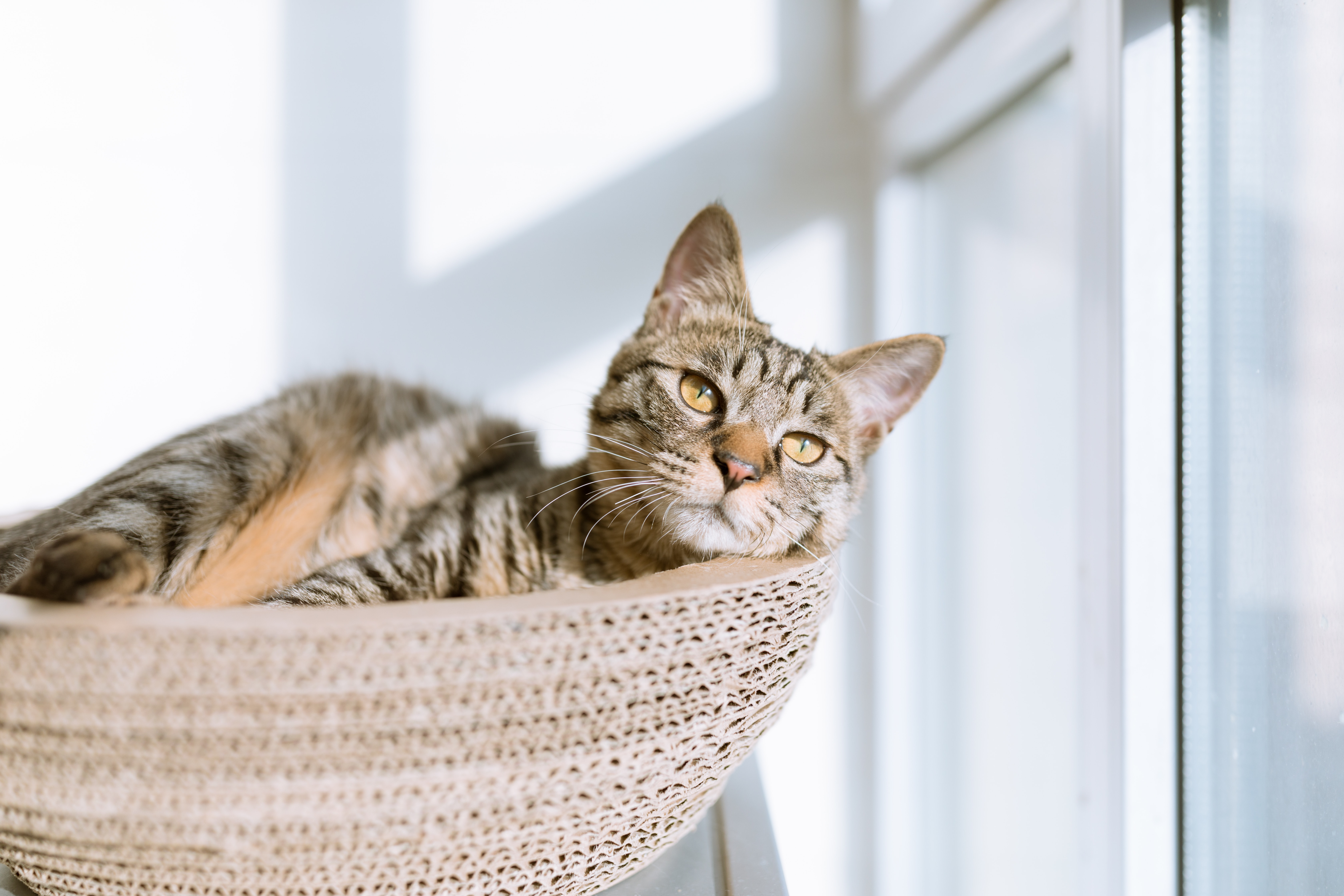 Снять квартиру с домашними животными